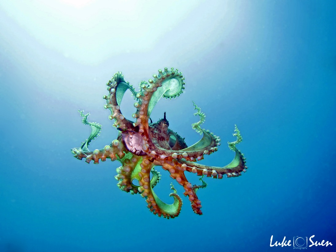 Octo work_edited-1